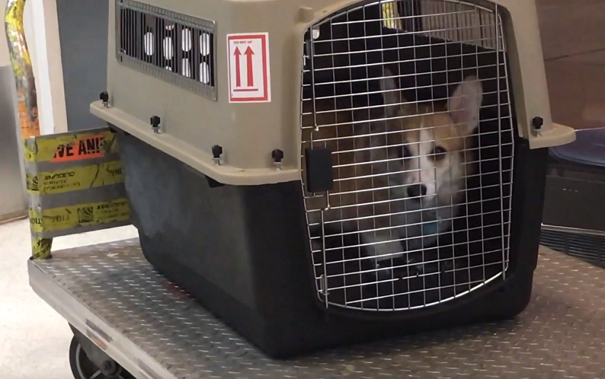 dog on cargo hold